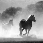 人生塞翁が馬