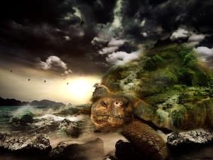 th_turtle-564733_640