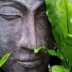 妄想人生に気づく瞑想力