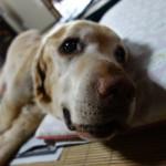 愛犬リクの死、ペットロス